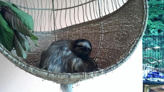 sloths in hammock