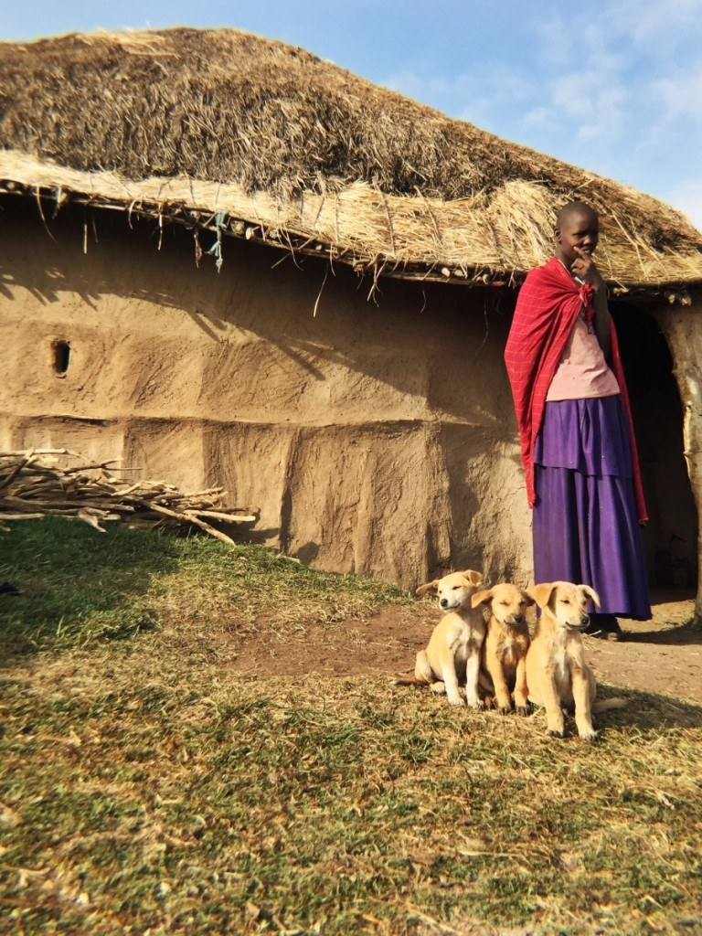 a maasai boma at the highlands