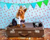 5 Top Tips for Traveling with Your Dog