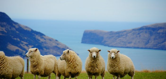 Working Holiday Visa to New Zealand