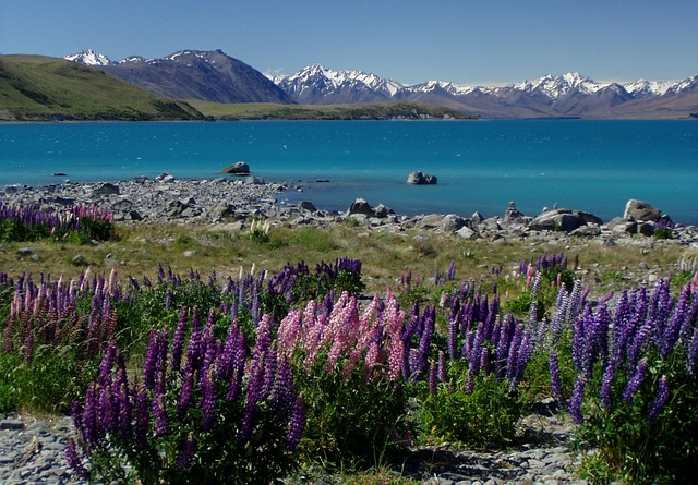 Planning a working holiday visa in New Zealand.