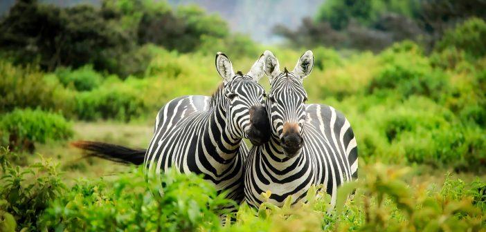 6 Reasons You Should Visit Kenya